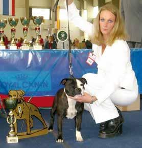 Staffordshire Bull Terrier Züchterin mit Hund