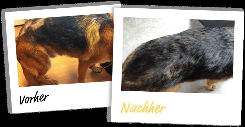 HOKAMIX: Haut und Fell - Vorher / Nachher